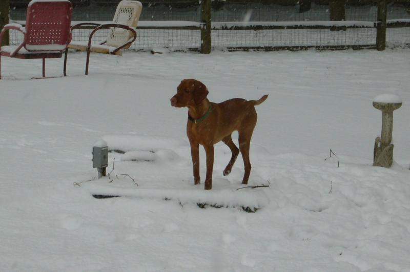 June's First Real Snow